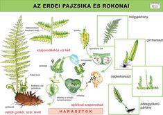 Cactus Plants, Biology, Montessori, Lily, Study, Teaching, Education, Plants, Studio