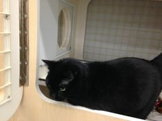 Marge is available for adoption through Angel of Hope Animal Rescue at PetCo Fridley.
