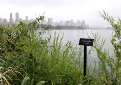 Selections from the Modern Landscapes - Kenneth Pietrobono - Socrates Sculpture Park