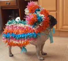 Pinata Dog Costume More video dog Cute Puppies, Cute Dogs, Diy Dog Costumes, Dog And Owner Costumes, Puppy Costume, Pet Halloween Costumes, Magical Makeup, Pug Love, Happy Dogs