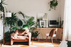 gravityhome:   Plant filled Barcelona apartment...