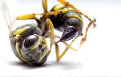 Macro - Insects - Kasha - Mazur