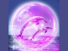 Dolphins in a violet bubble.