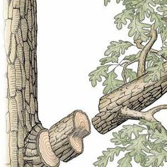 Tree Pruning Techniques...for future reference
