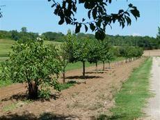 Le long de l'allée qui mène à la maison, des arbres fruitiers pour le plus grand plaisir des locataires: pruniers, pommiers, poiriers, pêchers, abricotiers, cerisiers... Il n'y a qu'à tendre la main pour se servir!