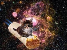 Burrito cat in space