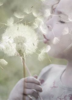 7cab294481b Blowing dandelion seeds Wish Come True