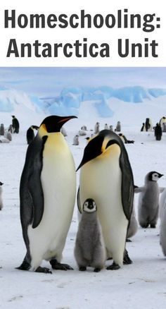 Learn how penguins' body temperatures help them stay warm. When scientists took infrared thermal images of emperor penguins, they found that the surface of t. Penguin World, Club Penguin, Penguin Party, King Penguin, Types Of Penguins, Cute Penguins, Emperor Penguin Facts, Emperor Penguins, Animals Images