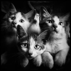 Cats by Azhari Yaacub on 500px