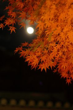 月ともみじ