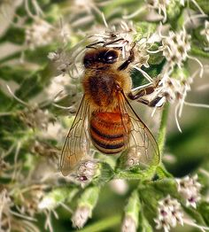 Beekeeping.  They have been the servant of mankind since ancient times.  We should protect them.