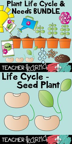 Plant Life Cycle & Plant Needs clipart BUNDLE.  Graphics are perfect for TpT sellers and classroom science teachers. TeacherKarma.com