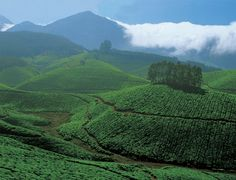 A slice of Kerala – Munnar, Thekkady & Alleppey - TripFactory Get inspired!