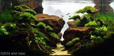 PlantsMini Christmass, Flame, weeping, riccardia, anubias nana petit Fish/Animals7 golden tetra, 10 Red cherry shrimp Decorative MaterialsSantigi woods, leles Stone