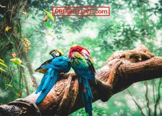 The California Deforestation-Free Procurement Act could aid rainforest preservation by banning products that derive from tropical deforestation. Jungle Images, Jungle Pictures, Bokeh, Rainforest Deforestation, Rainforest Pictures, Rainforest Action Network, Presets Lightroom, Species Extinction, Colorful Parrots