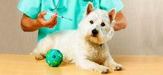 Vacina contra a doença do carrapato pode salvar a vida de cães em todo o mundo http://farofinopet.blogspot.com.br/2013/01/vacina-contra-doenca-do-carrapato-pode.html
