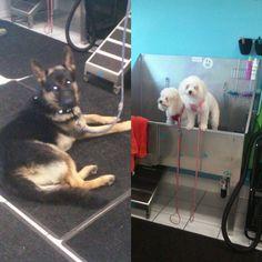 Self service dog wash pet store ideas pinterest service dogs buddies bathing at bark bath solutioingenieria Gallery