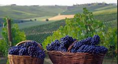 vendemmia.PNG (506×276)