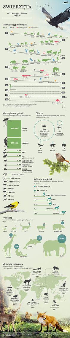 Przyzwyczailiśmy się myśleć, że świat jest naszą własnością, a my - ludzie jesteśmy najdoskonalszym spośród gatunków. Tymczasem świat fauny naprawdę potrafi zaskoczyć - obok nas żyją organizmy, któryc... Learn Polish, Polish Language, Montessori Elementary, Animal Habitats, Girls World, Animals For Kids, Good To Know, Kids Learning, Poland