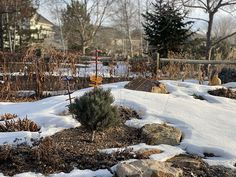 Evaluating your garden when it is bare or covered in snow gives you a greater perspective on its form and structure.