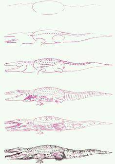 Draw crocodile