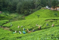 Bangladesh is famous for beautiful green tea gardens. There are more than 160 beautiful tea gardens in this country. Bangladesh is one of . Bangladesh Travel, Dhaka Bangladesh, Beach House Restaurant, Places To Travel, Travel Destinations, United Nations Peacekeeping, Kerala Travel, Countries Of The World, Southeast Asia