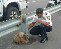 The animal was scooped up by the workers, and taken to a veterinarian.