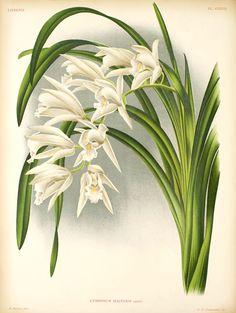 Beltempo découpage: Stampe botaniche