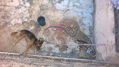 Cachorra morre em imóvel na Vila Padovan causando revolta entre vizinhos e rede social -   Moradores da Vila Padovanestão revoltados após a morte de uma cachorra em uma residência na Rua Palmiro Biazon na tarde deste domingo, dia 19. Segundo testemunhas que moram no local, o animal ficou preso durante todo o dia debaixo do sol forte.  Imagens do animal foram divulgadas em - http://acontecebotucatu.com.br/policia/cachorra-morre-em-imovel-na-vila-padovan-causand
