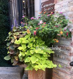 5 Heat-Tolerant Container Ideas for the Desert Garden - Southwest Gardening