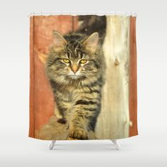 catwalk shower curtain
