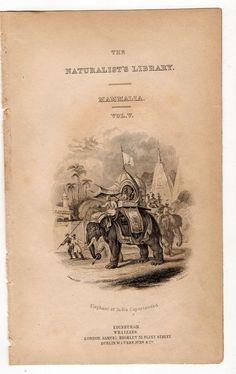 1836 elephant original antique animal print engraving - indian elephant caparisoned Antique Prints, Vintage Prints, Land Turtles, Tropical Animals, Indian Elephant, Hand Coloring, Natural History, The Originals, Antiques