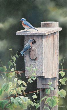 New Beginnings - Bluebirds  by Susan Bourdet