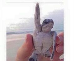 #cutenessoverload #turtle #rockon