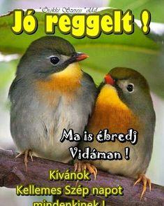 Parrot, Humor, Animals, Parrot Bird, Animales, Animaux, Humour, Funny Photos, Animal