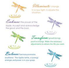 Dragonfly change theory. (c) Eva Lynn Cowell 2011