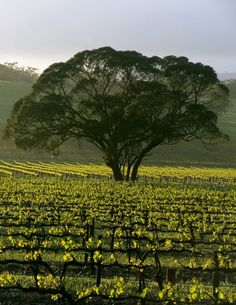 Take a winery tour through the Barossa Valley, South Australia