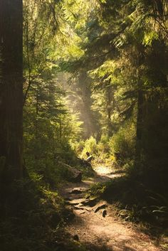 Märchenpfad © aaronfredericy - - Wald - You are in the right place about Landscaping with rocks Here we offer you the most beautiful pictures abou Forest Path, Forest Fairy, Mystical Forest, Forest Trail, Beautiful World, Beautiful Places, Beautiful Pictures, Beautiful Forest, Landscape Photography