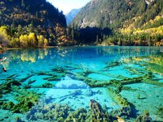 One of the most (if not the most) beautiful places on earth: #Jiuzhaigou.  Especially pretty in autumn.  And if you're wondering, this photo is probably not enhanced at all; the water is really this clear and blue.