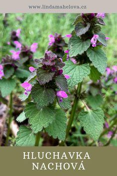 Herbalism, Herbs, Flowers, Plants, Herbal Medicine, Herb, Plant, Royal Icing Flowers, Flower