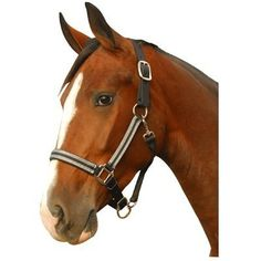 Silverado Halter by Intrepid International. $19.25. Silverado Halter Features a breakaway leather crown. Either black, hunter or navy with silver accented stitching. Sizes horse, cob or yearling. Matching leads available.