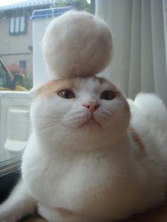 orinshi:  ネコっていいね!