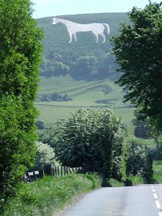 The Westbury White Horse, Wiltshire, England. The oldest of several white horses carved in Wiltshire. It was restored in The origin of the Westbury White Horse is obscure. England Ireland, England And Scotland, Monte Fuji Japon, Westbury Wiltshire, British Countryside, British Isles, Great Britain, Aliens, Places To See
