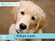 Consider adopting a pet from a shelter first. Yes I did I adopted 1 Guinea Pig and  Dog