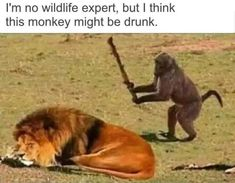 Funny pictures, jokes and funny memes sharing website to make others laugh. Get more funny pictures here. Login and share funny pic to make world laugh. Funny Animal Memes, Cute Funny Animals, Funny Animal Pictures, Funny Images, Funny Monkeys, Hilarious Pictures, Funny Monkey Memes, Animal Humor, Haha Funny