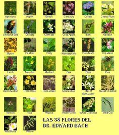 Las 38 flores de Bach