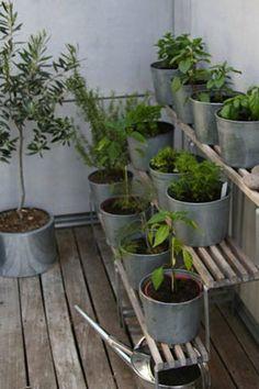 http://www.mylittlejardin.fr/blog/wp-content/uploads/2014/10/potager-au-balcon-aromates-pots-zinc.jpg
