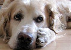 Der will doch nur spielen ... ;-) www.hunde-buch.com