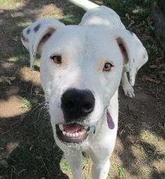 I'm Dougie! I'm a playful and fun boy from Gympie, looking for a furever home. Could it be yours? Come find out today! http://bit.ly/2iCWD02