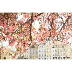 Paris Photography, Spring by the Seine, Pink Cherry Blossoms, Paris... ($32) ❤ liked on Polyvore featuring home, home decor, wall art, photography wall art, parisian wall art, tree home decor, sakura tree and cherry blossom wall art